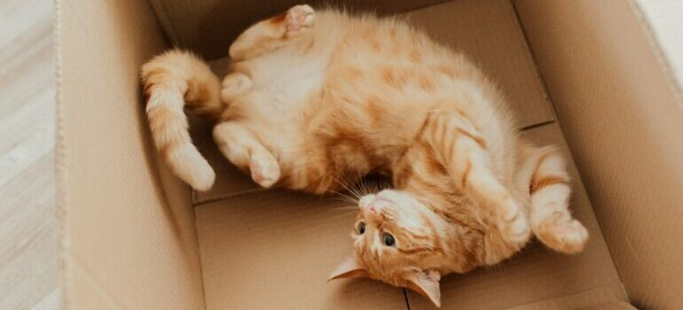 reuse moving boxes after the move by letting your cat have it