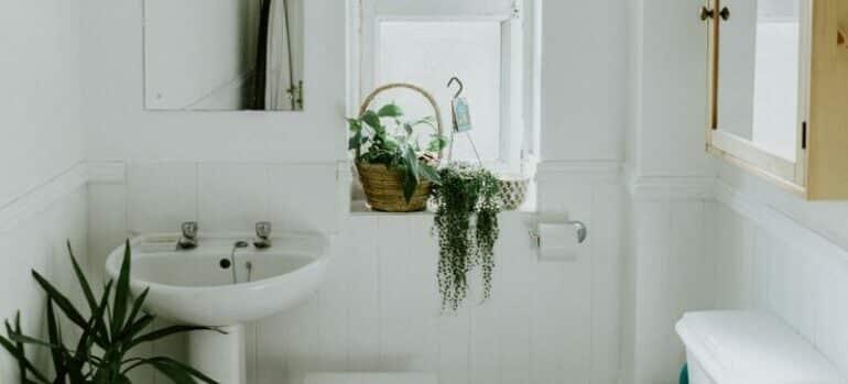 white ceramic bathroom with plants